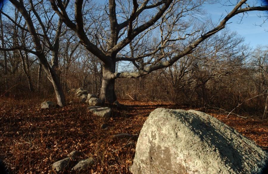 Menemsha Hills, Martha's Vineyard, Massachusetts, USA.  March 2008.
