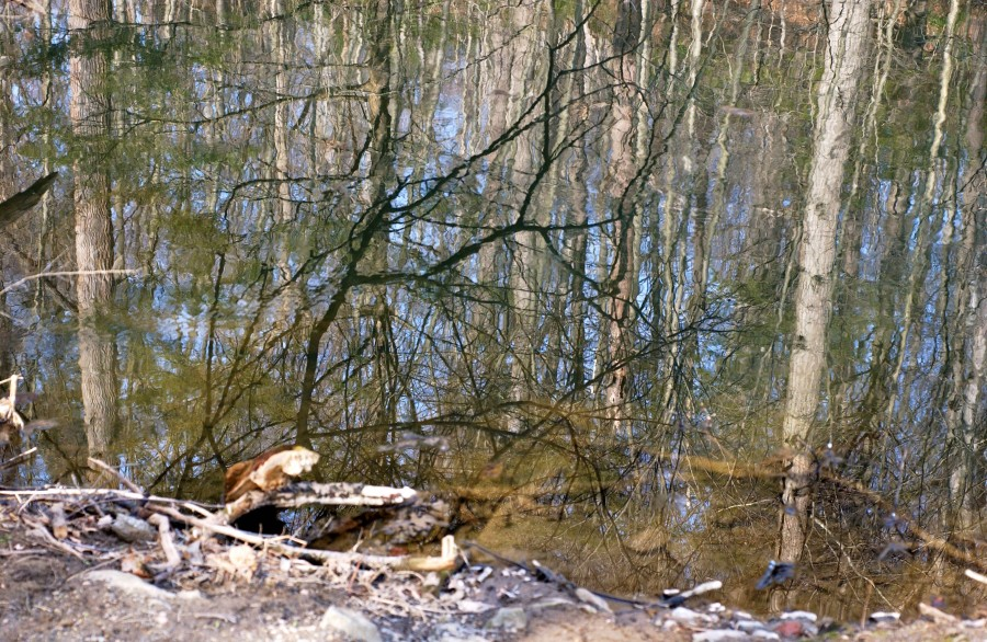 Foreground and reflected woodland entwine in late-winter beauty along the Wissahickon Creek, Fairmount Park, Philadelphia, Pennsylvania, USA.  March 2009.