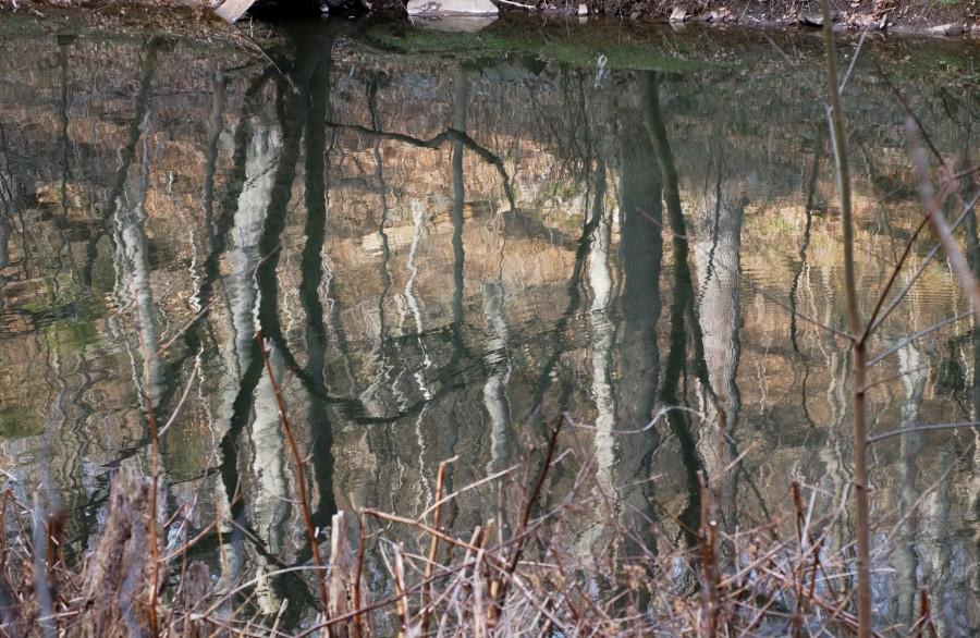 Mirrored woodland as seen from along the Wissahickon Creek, Fairmount Park, Philadelphia, Pennsylvania, USA.  March 2009.